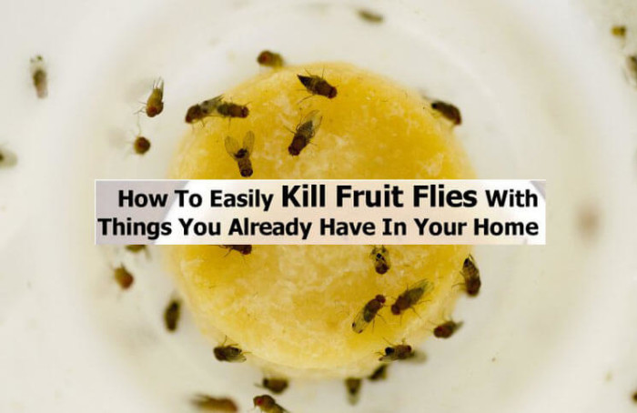 Home Remedies To Get Rid Of Flies In The Kitchen