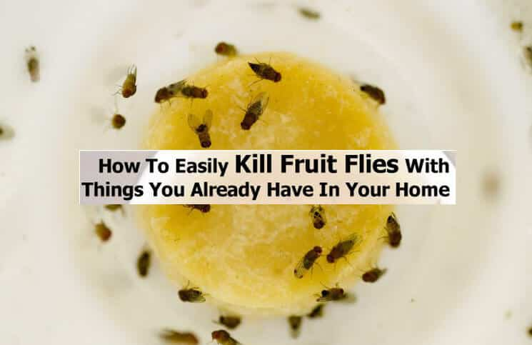 healthy breakfast with fruit do fruit flies bite