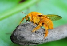 Home Remedies to Get Rid of Carpenter Bees Forever