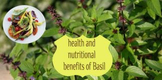 15 Awesome health and nutritional benefits of Basil for wholesome health