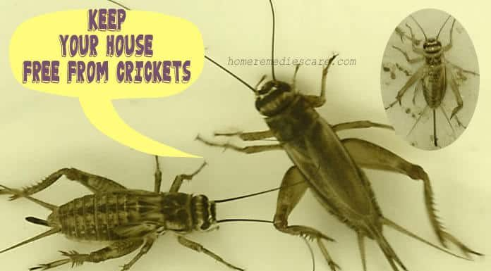 Home Remedies To Get Rid of Crickets