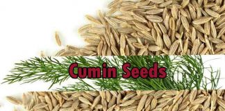 Health Benefits Of Cumin Seeds – the Powerhouses of Nutrition and Health