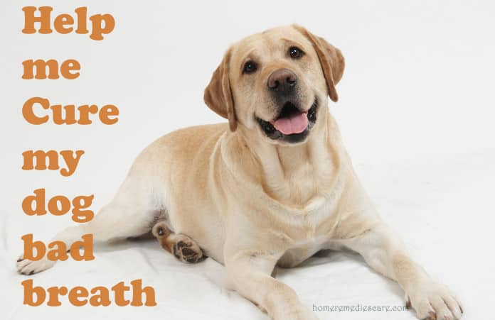 Natural Remedies Bad Breath Dogs