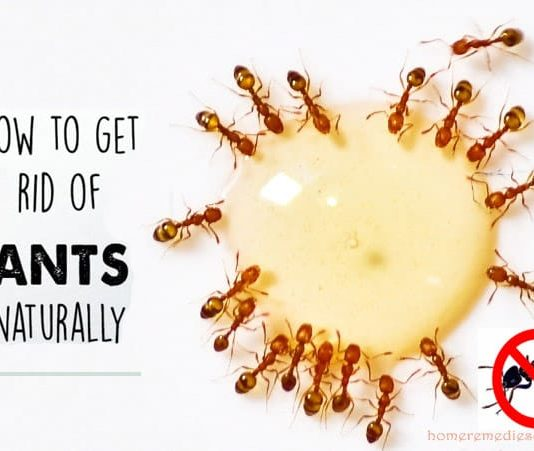 how to get rid of ants home remedy