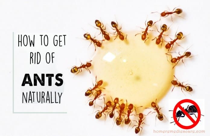 22 Effective Home Remedies For Natural Ant Control U2013 Keep Your Kitchen Ants  Free