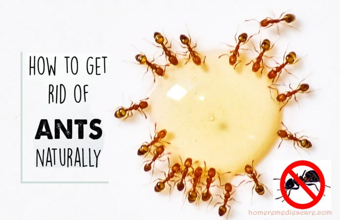 22 Effective Home Remedies For Natural Ant Control Keep
