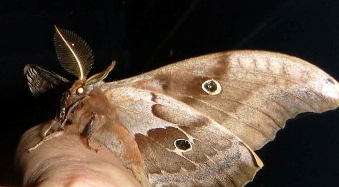 Ways Of Getting Rid Of Moths Naturally