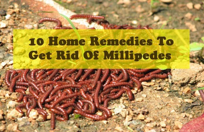 10 Simple Home Remedies To Get Rid Of Millipedes