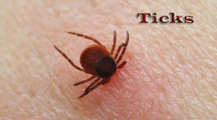 Home Remedies to Get Rid of Ticks Without a Trace
