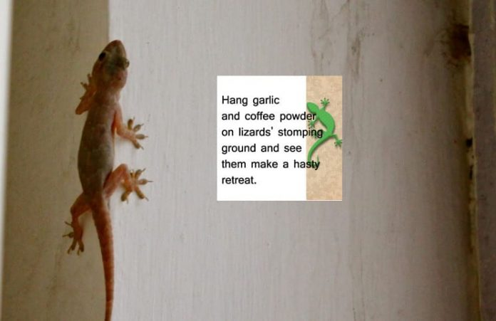 16 Easy and Efficient Home Remedies to Get Rid of Lizards Infestation