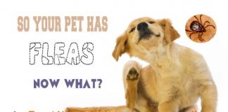 Keep Fleas Away From Your Dog In A Natural Way Home Remedies