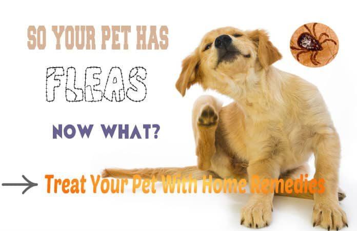 Natural Way To Rid Dog Of Fleas