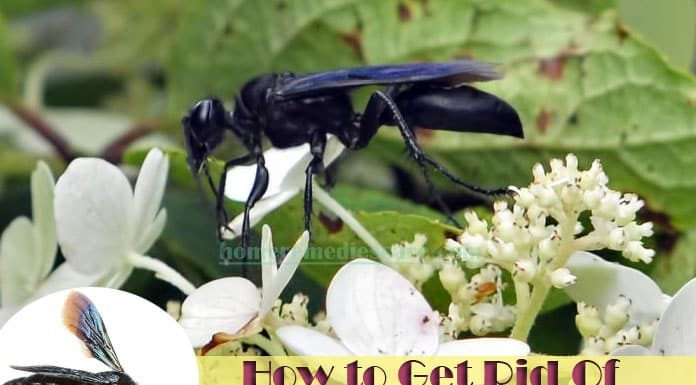 Natural Home Remedies To Get Rid Of Wasps