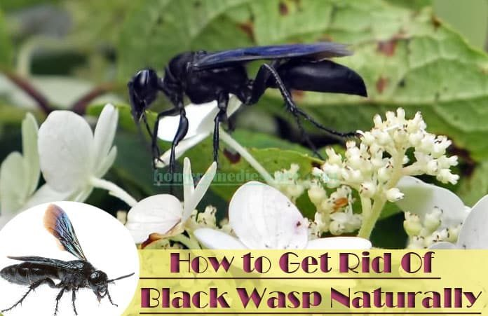 Natural Remedy To Get Rid Of Wasps