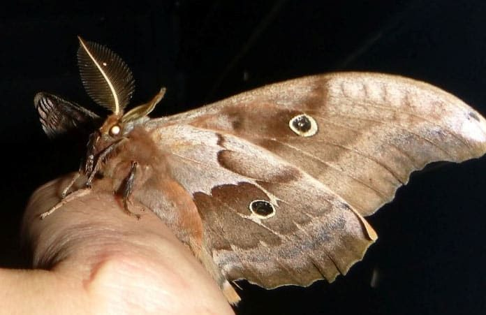 How To Rid Of Moths Naturally