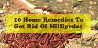10 Home Remedies To Get Rid Of Millipedes